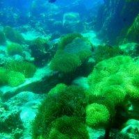 красоты Индийского океана 2 :: валерий телепов