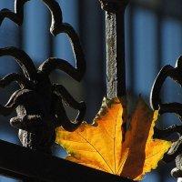 Осенний этюд :: john dow