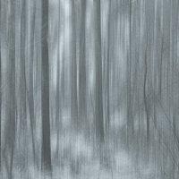 тёмный лес :: Алексей Карташев