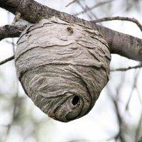Осиное гнездо :: Андрей Васильевич Гармажапов