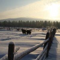 Зима в деревне :: Светлана Телегина