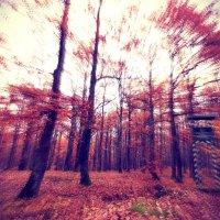 Осінні барви :: Анатолій Дубаневич