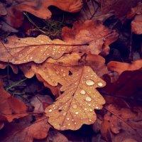 Краплі дощу :: Анатолій Дубаневич