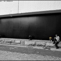 Желтые цветочки :: DR photopehota