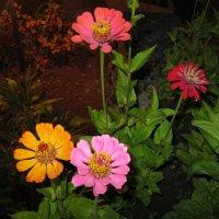 Разноцветики :: Александр Надежин