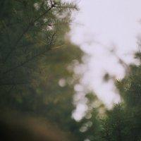 В лесу на опушке :: Sergey Popoff