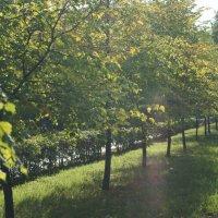 парк :: Алёна Мосеенкова