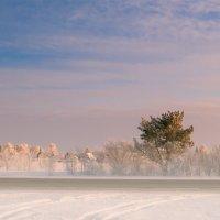 Зимний день :: Елена Трунова