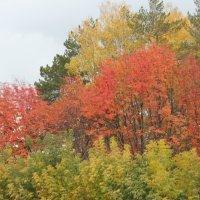 осень :: наталья якушева