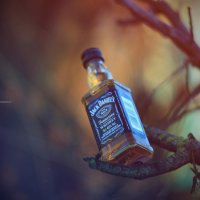 Jack Jr. :: Dmitriy Antropov