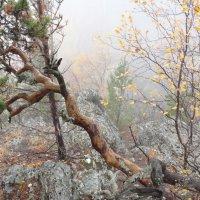 Туман, туман... :: Наталья Иванова