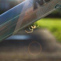 паук :: Мария Юртаева