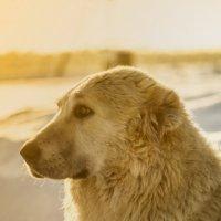 Медвед :: Алексей Кепычъ