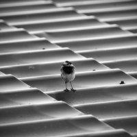 Не орел ) :: Андрей Саенко