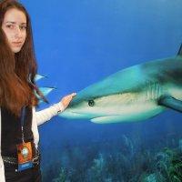 Акула - друг человека ! :: Игорь Абрамов