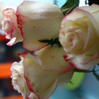 Розы :: Мария Юртаева