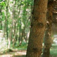 Как же хорошо в сосновом лесу... :: Sergey Popoff