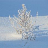 Маленькое зимнее деревце :: Димарик Лакман