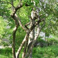 Деревья в моем дворе :: Виктория Мароти