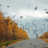 Осенью в Лысогорском районе в Саратовской области :: Игорь Чижов