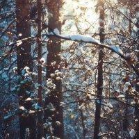 Зима 2013 :: Юлия Федорова