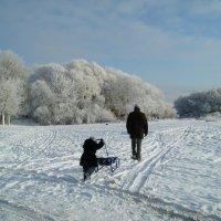 Мороз и солнце :: Нина Костина