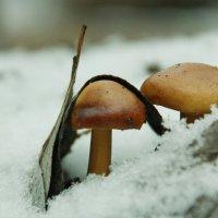 первый гриб 2013 :: Света Солнцева