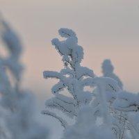 Нежность зимы... :: Maxxx©