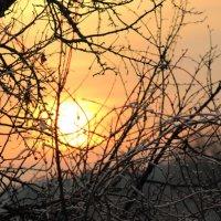 закат в деревьях :: Александр Маликов