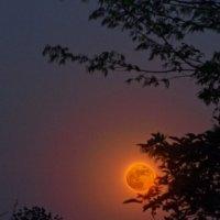 красная луна :: Юрий Кальченко