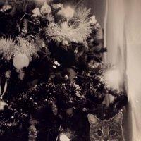 Типичная фотография с ёлочкой :: Аня Разумовская