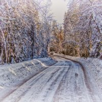 В лесу :: Виталий Бенгард