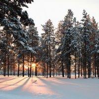 таежная зима :: Dan See