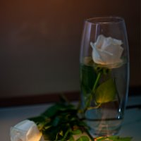 белые розы... :: Сергей Яговкин