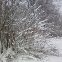 Зарисовка зимнего леса. :: Александр Юнусов