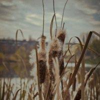 Осенний камыш :: Женя Петров-Юкин