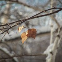 Осенние следы :: Алёна Бодрова