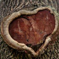 Сердце в дереве :: Александр Жабров