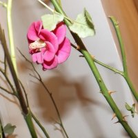 Цветок :: Наталья Савенко
