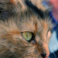 кошка :: Андрей Махнык