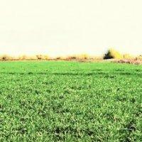 Панорама поля :: София Ковалева