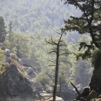 Зелёный каньон :: Валерий Дмитриев