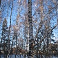 Сибирский лес :: Валентина Малютина