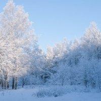 Зимний лес :: Денис Храменков