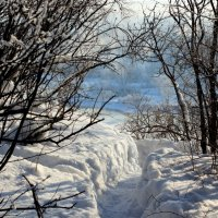 Снежною тропой! :: Дмитрий Арсеньев