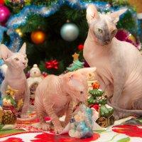 Новогодние котейки :: Илья Орлов