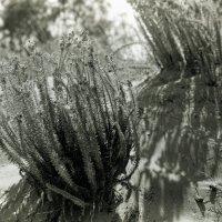 Морские травы :: Alexander Reiz