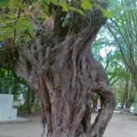 Чудо-дерево :: Лада Замараева