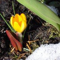 последний снег :: Татьяна Орнес