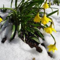 снег весной :: Татьяна Орнес